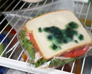 MOLD-sandwich_bag